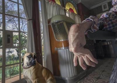 Jesse the Boerboel dog glances back at Julius in the Van der Wat's sun-porch living room in their home in Parktown, Johannesburg.