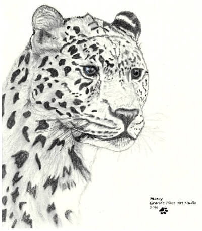 Cheetah Portrait; by Marcy, Gracie's Place Art Studio.