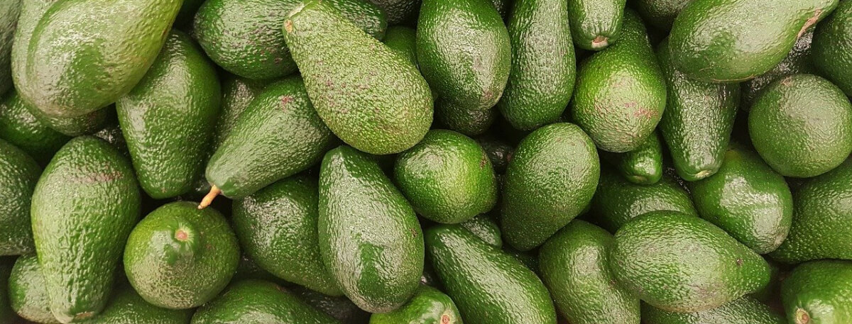 Image depicts a number of green whole avocados.
