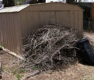 Image of the branches Richie pruned from the elm trees