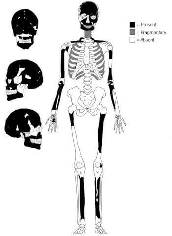 Graphic representation of the burial skeletal preservation shows bones that were present in black. Illustration Credit: Nicole Smith-Guzman.