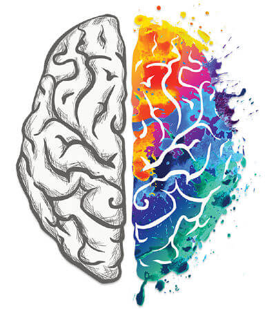 Illustration of the human brain showing white colored left hemisphere and multicolored right hemisphere.