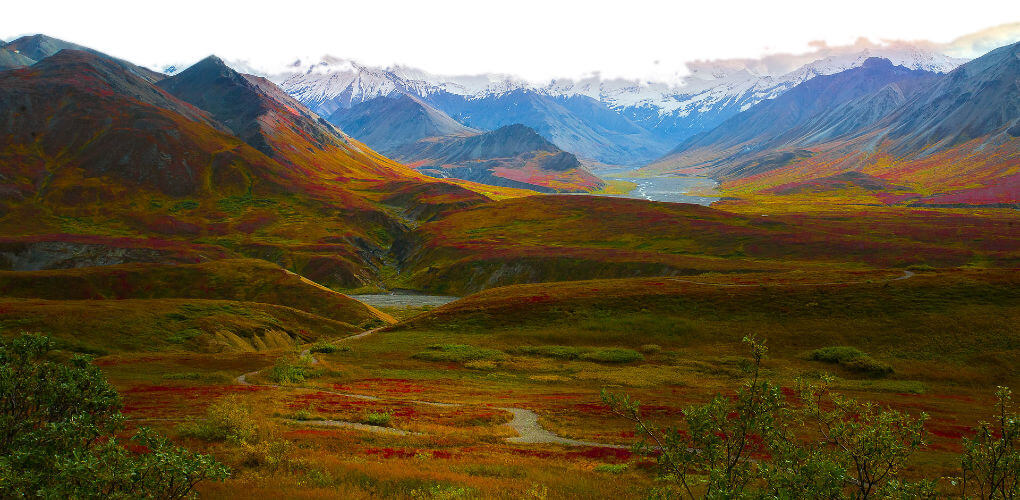 The Denali National Park is located about 380 km's to the north of Anchorage in Alaska.