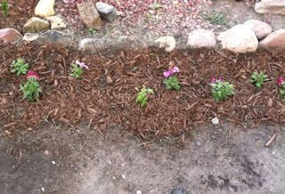 Image of the flowers Richie planted for his mother