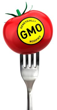 tomato with genetically modified label on table fork