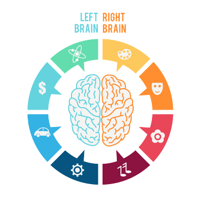 Simple diagram of lateralization of human brain function.