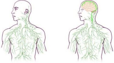 Maps of the lymphatic system: old (left) and updated to reflect UVA's discovery. Picture Credit: University of Virginia Health System