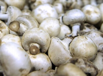 Mushrooms have higher quantities of two important anti-oxidants (ergothioneine and glutathione) that may help with anti-aging treatments and strategies - (Patrick Mansell).