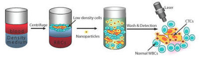 Gold-based nanoparticles can detect circulating tumor cells