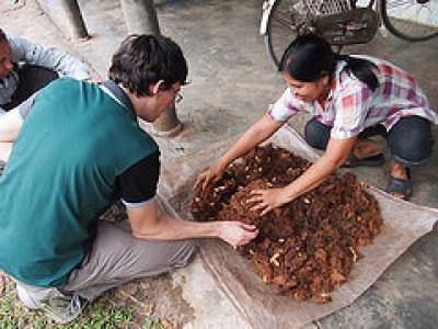 Gabriel Mott, a founder of Aspire, helps a villager harvest farmed palm weevils. Novel farming technologies provide high protein edible insects and address food insecurity in slums in Ghana, Kenya and Mexico (McGill University, Montreal and Aspire, seed grant #0479). Photo Credit: Aspire