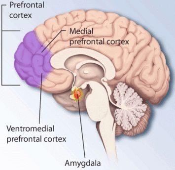 Regions of the brain affected by PTSD and stress.