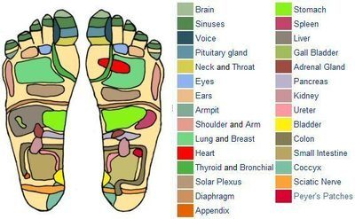 Color coded diagram of a Reflexology foot chart showing various pressure areas.