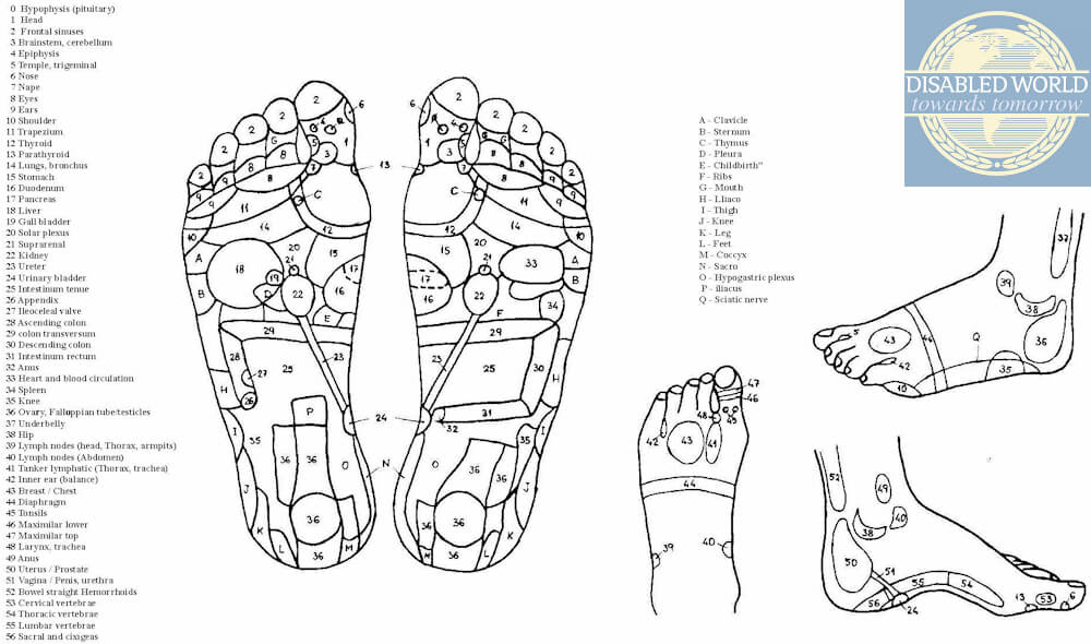 Printable diagram displaying and listing the corresponding reflexology zones located on the feet.