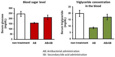 Comparison of sugar and lipid concentration fluctuations in blood in a dysbiosis mouse model and non-antibiotic administered mice. Both sugar and lipid concentrations decreased in mice that received antibiotics only - Diagram Credit: Professor Sumio Ohtsuki.