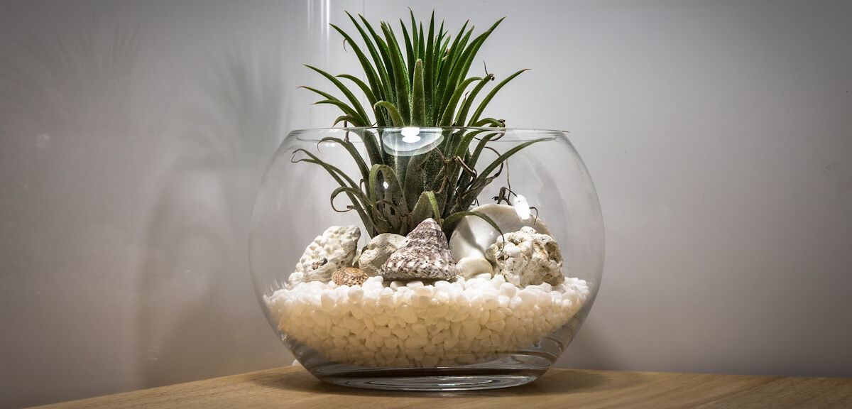 A simple terrarium created in a round fish bowl with seashells and cactus plant features.