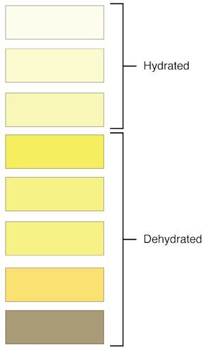Urine Colors Chart: Meaning Of Pee Color & Smell - Disabled World