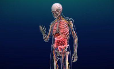 YOU App available for VIVE VR is a medically accurate, realistic, visual 3D representation of organs, diseases, and treatments for the human body.