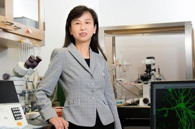 Zhen Yan, PhD, professor, Department of Physiology and Biophysics, has founded a startup company based on the promising results - Photo Credit: Sandy Kicman/University at Buffalo.